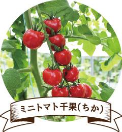 ミニトマト千果(ちか